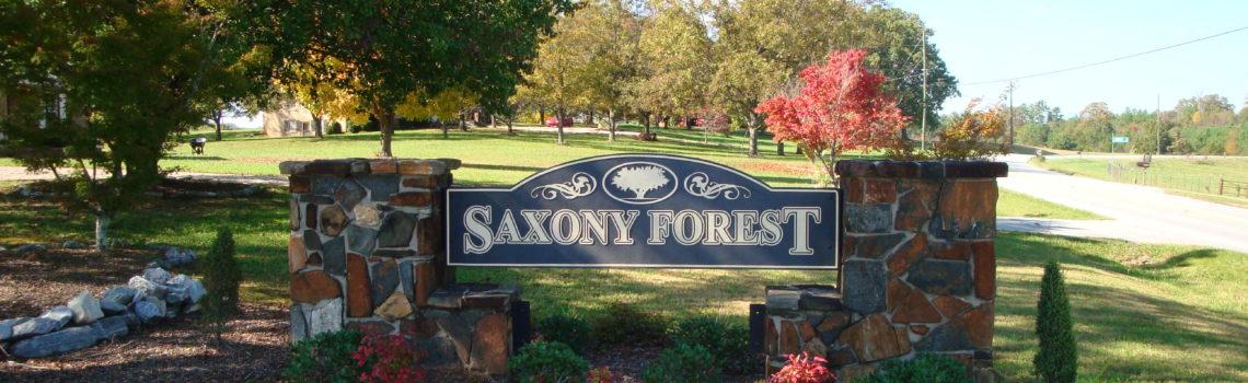 Saxony Forest